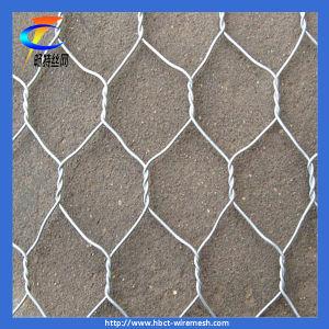 Galvanized Hexagonal Netting pictures & photos