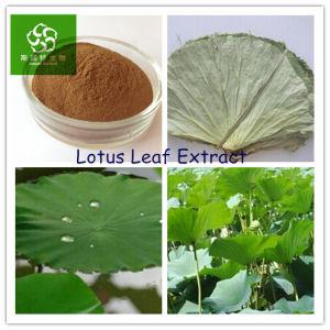 Folium Nelumbinis Extract Lotus Leaf Extract