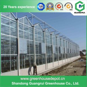 Toughened Glass Green House for Venlo Hydroponic Greenhouse pictures & photos