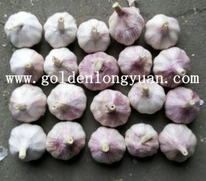 2016 New Season Fresh Garlic pictures & photos