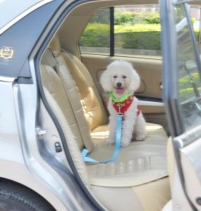 Cotton Rope Dog Leash Handmade Cotton Dog Leash in Car pictures & photos