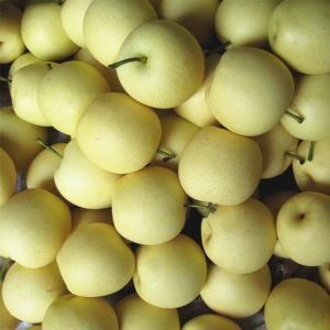Fresh New Crop Golden Pear/Crown Pear Good Quality pictures & photos
