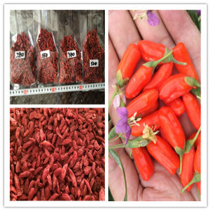 Dired Goji Berry with Low Pesticide Residues (350)