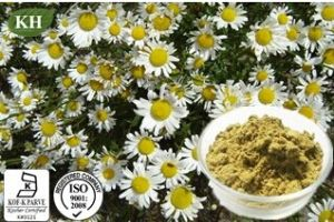 Kingherbs′ 100% Natural Chamomile Extract Matricaria Extract: Apigenin 0.3%, 98% by HPLC; Apigenin 0.2%, 0.8% by UV; Apigenin 4: 1, 5: 1, 10: 1 pictures & photos