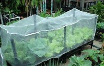 Anti-Insect Net for Vegetables and Fruits pictures & photos
