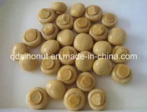 Whole Mushroom with High Quality, Nice Size, Best Price (HACCP, ISO, BRC, FDA, HALAL, KOSHER) pictures & photos