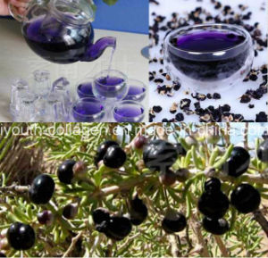 Health Food, Wolfberry Fruit Tea, 100% Natural Wild Black Chinese Wolfberry Dried Fruit, Anticancer,Antiaging,Whitening,King of Anthocyanins,Medlar,Wolfberry pictures & photos
