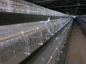 Hot-DIP Galvanized Layer Cage Certificate of ISO9001 pictures & photos