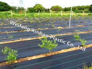 Weedtex/Weed Control Fabric/Ground Cover pictures & photos
