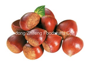 2016 Chinese Organic Fresh Chestnut pictures & photos
