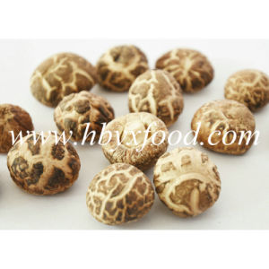 2-2.5cm Organic Green Dried Tea Flower Mushroom pictures & photos