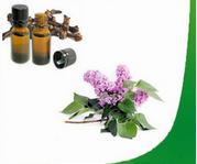 Natural Eugenol for Perfume Fragrance Oil Using
