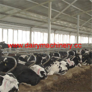Steel Cow Free Stall Cow Farm Equipment pictures & photos