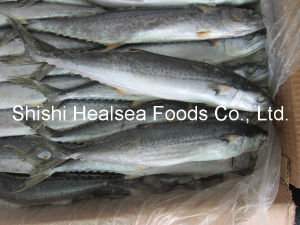 Frozen Fish W/R Spanish Mackerel for Market pictures & photos