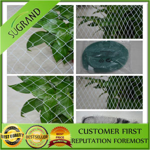 Hot Sale Diamond Anti Bird Netting pictures & photos