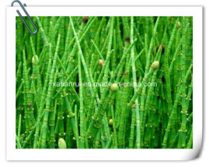 Manufacturer Natural Meadow Pine/Equisetum Arvense Extract Powder pictures & photos