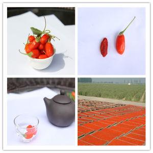 Organic Goji Berry of 450grains/50g