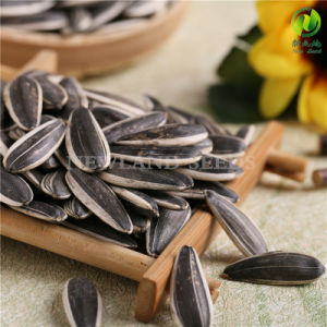 Export Sunflower Seeds 363 Made in Hetao Plain