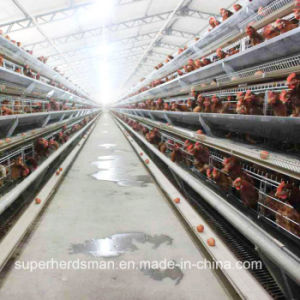 Automatic Chicken Cage Farm for Layers and Broilers pictures & photos
