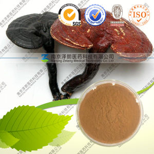 100% Natural Reishi Mushroom Extract pictures & photos