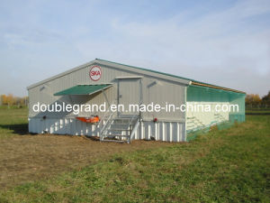 Steel Structure Poultry Shed/Chicken House (DG6-002) pictures & photos