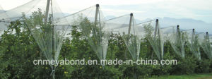 Apple Tree Anti Hail Net pictures & photos