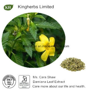 Damiana Leaf Extract 4: 1, 10: 1 Turnera Diffusa Extract pictures & photos
