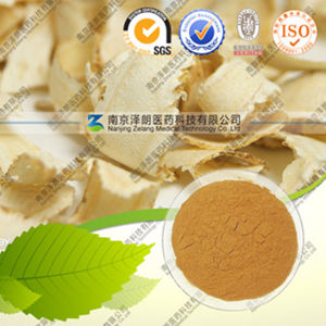 Natural Radix Quinquefolii Extract American Ginseng P. E pictures & photos