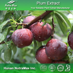 Top Quality Plum Extract (Plum Powder, 4: 1~20: 1)