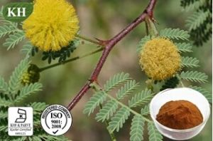 Acacia Catechu Extract: 6: 1; 40% Catechins (catechin, epicatechin) CAS No. 7295-85-4 pictures & photos