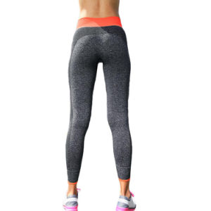 Awesome Design Gym Pants Ladies Yoga Pants with Contrast Color Waistband pictures & photos