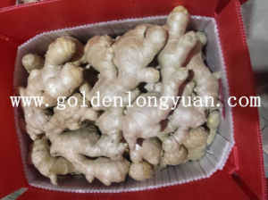 Factory Supply Whole Air Dry Ginger pictures & photos