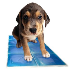 Pet Dog Chilly Mat Waterproof Comfort Cool Mat Puppy Gel Cool Mat for Small /Medium /Large Dogs and Cats pictures & photos