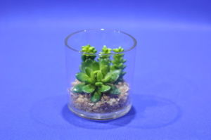 Artificial Plants and Flowers of Mini Plant Succulent Gu-SD0299 pictures & photos