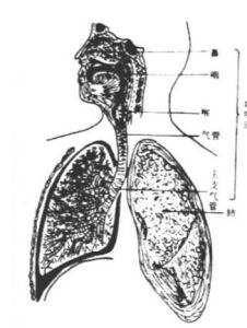 (Metronidazole) --Treatment of Respiratory Metronidazole pictures & photos