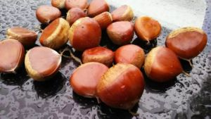 2016 New Season Export 50-60 Professional Best Chinese Fresh Chestnut pictures & photos