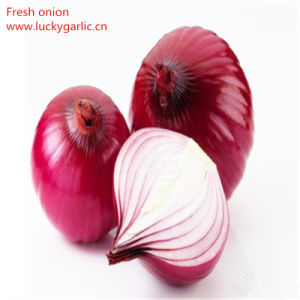 China New Quality Fresh Red Union pictures & photos