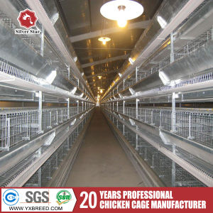 H Type Chicken Cages with Full Automatic System pictures & photos
