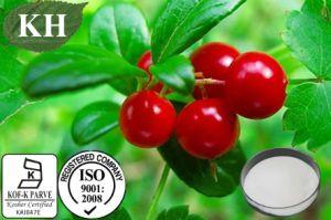 Supply Whiten Skin 99% Alpha Arbutin Bearberry Leaf Extarct pictures & photos