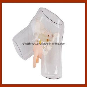 Nursing Training Transparent Male Urethral Catheterization Simulation pictures & photos