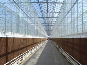 Cooling Pad and Ventilation Greenhouse for Sale pictures & photos