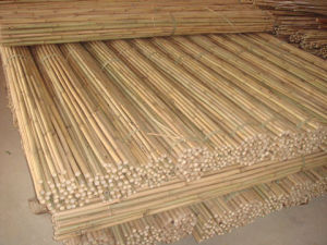 Tonkin Bamboo Cane pictures & photos