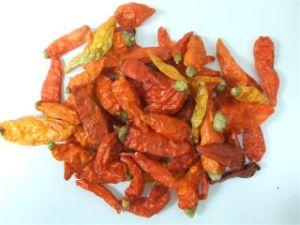 Xiao Mi La Chilli Capsicum Frutescens