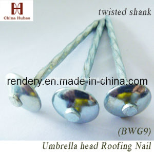 Screw/Galvanized Twisted Shank Umbrella Roofing Nail pictures & photos