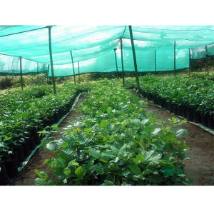 PP Greenhouse Sun Shade Cloth Netting pictures & photos