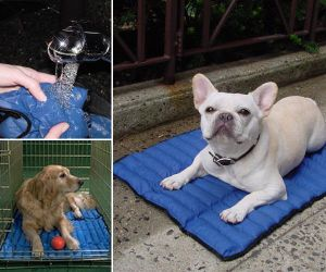 Economical Cool Bag for Dog Bed pictures & photos