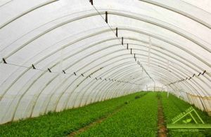 Single Tunnel Greenhouse/ Vegetable Greenhouse/ Cheapest Greenhouse pictures & photos