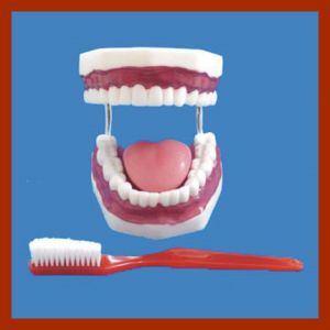 Oral Hygiene Teeth Model for Dental Study pictures & photos