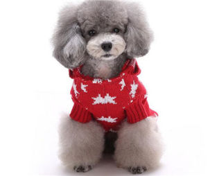 Big Dog Clothes pictures & photos