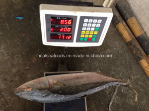 Frozen Fresh Yellow Tail 5kg up Whole Round pictures & photos